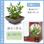 2個セット KOBON AR1227001 在庫僅少商品につき注意! コケ玉を使用した和風グリーン (南天×苔玉)