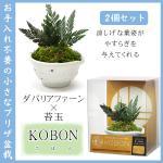 2個セット KOBON AR1227002 コケ玉を使用した、手軽でオシャレな和風グリーン (ダバリアファーン×苔玉)