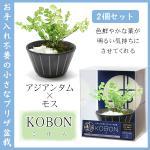 2個セット KOBON AR1227003 コケ玉を使用した、手軽でオシャレな和風グリーン (アジアンタム×モス)