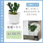 2個セット KOBON AR1227004 コケ玉を使用した、手軽でオシャレな和風グリーン (柘植(つげ)×モス)